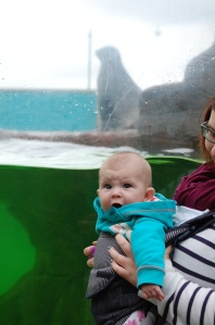 SB meets some sea lions (and isn't impressed)